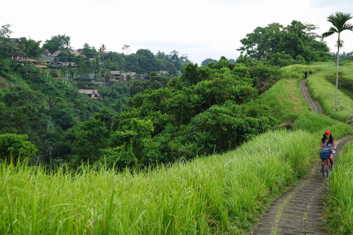Enjoy Your Holiday In Ubud By Having Fun Ubud Bicycle Tour