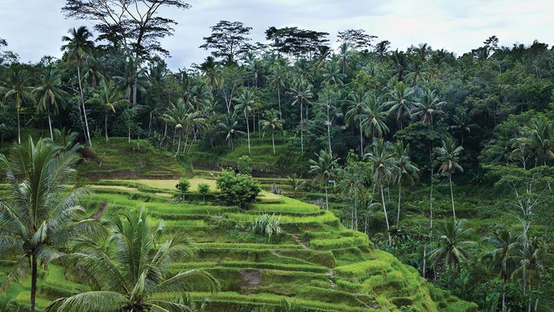 Ubud Restaurant with A View: Bebek Bengil, Ubud, Bali