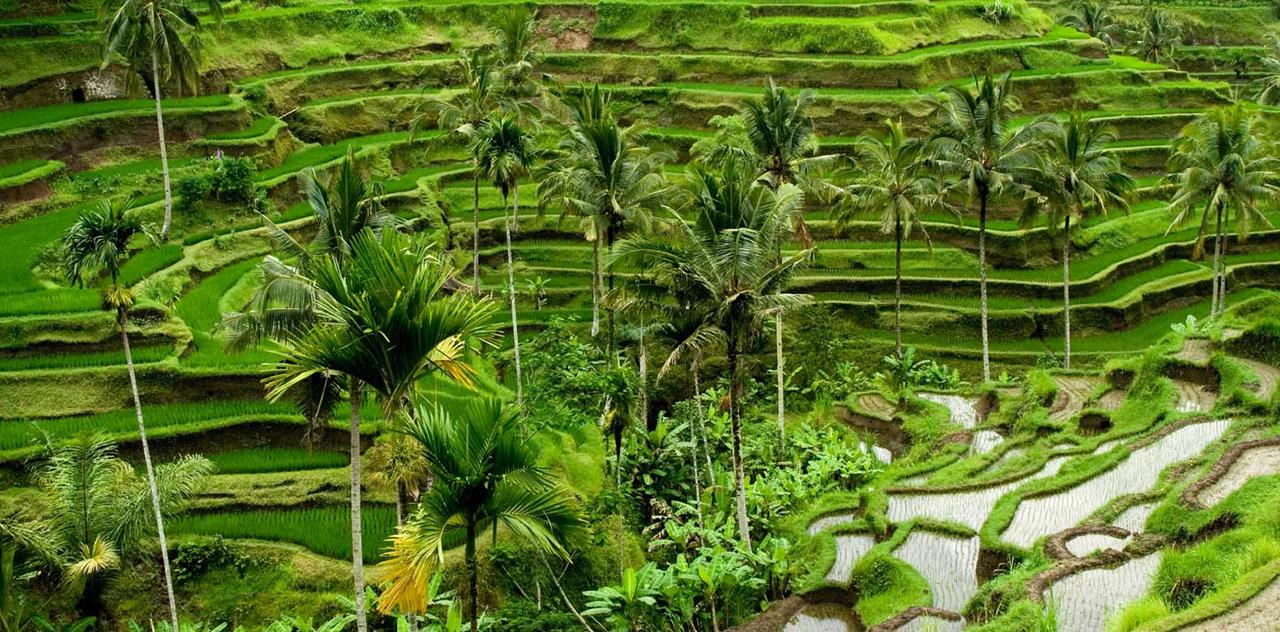 Dimana Tempat untuk Menikmati Pemandangan Alam paling Populer di Ubud?